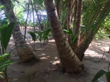 corn-island-5